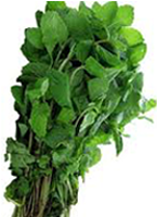 Mint Leaves 1 pack
